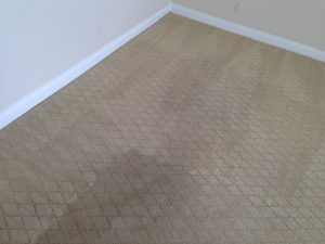 carpet cleaning calabasas