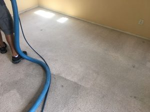 carpet cleaning mar vista